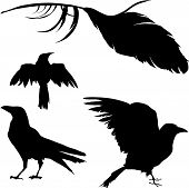A vector silhouette illustration of a raven crow and other birds on white background poster