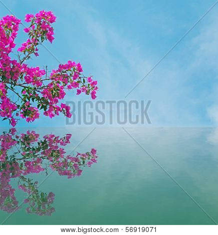 Bouganvillea Reflection