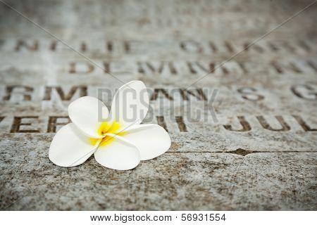 White Flower on tombstones in old cemetery Museum Prasasti Jakarta Indonesia