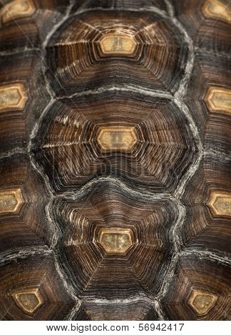 Close-up of an African Spurred Tortoise's carapace, Geochelone sulcata, isolated on white