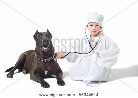 Little vet listens to a stethoscope dog poster