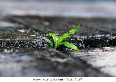 Green Grass Growing Through Crack