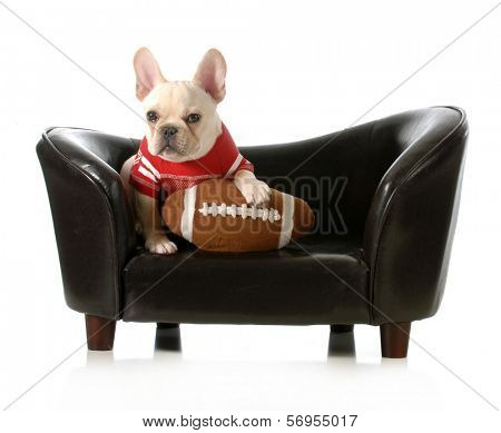 sports hound - french bulldog with stuffed football sitting on couch isolated on white background