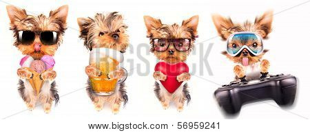 dog with beer, game pad and lover valentine poster