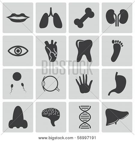Vector black  anatomy  icons set