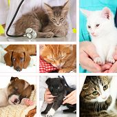 Collage of different pets at vet poster