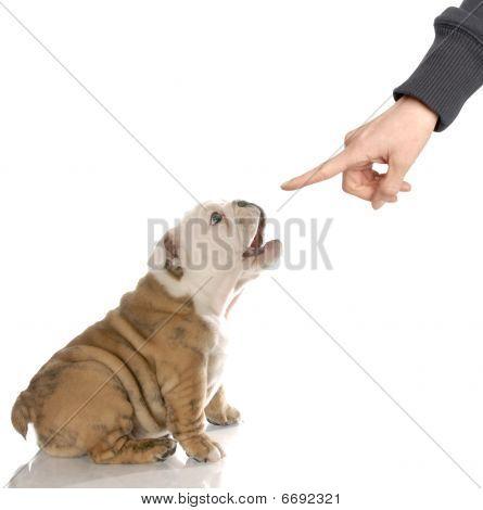 Puppy With Bad Attitude