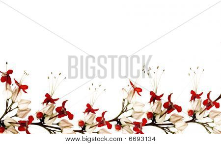 Red And Black Butterfly Flower Border