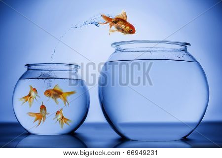 Fish happily jumping