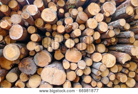 Large wood logs