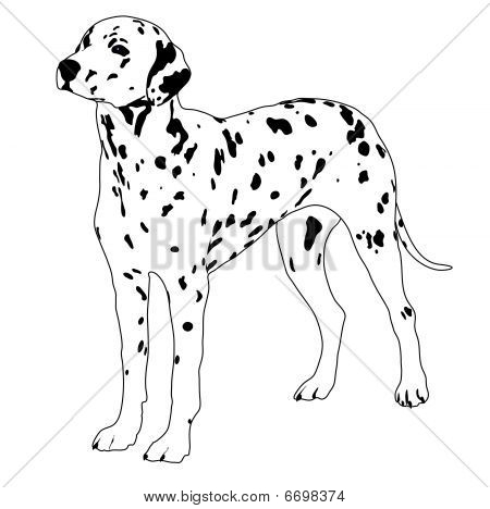 illustration of vector black and white Dalmatian Dog poster