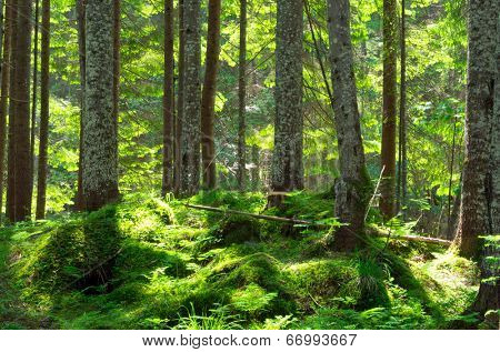 Early morning sun in the green forest