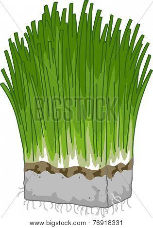 Illustration Featuring a Block of Wheatgrass