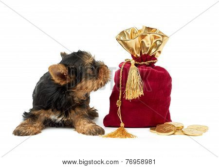Puppy And Sack