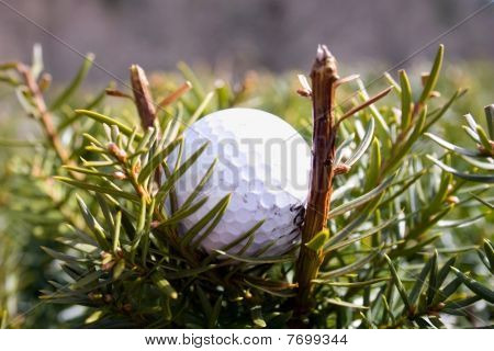 Misplaced Golfball