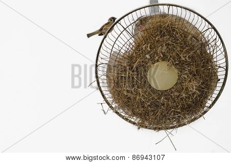 Sparrow Standing On The Ceiling Fan, Where It Made Its Nest On White Background.tif