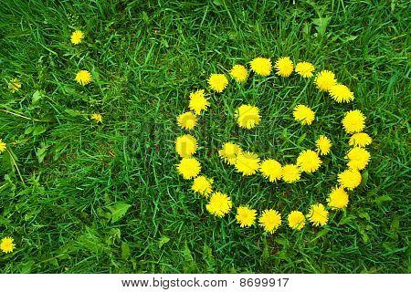 Dandelion Happy Face
