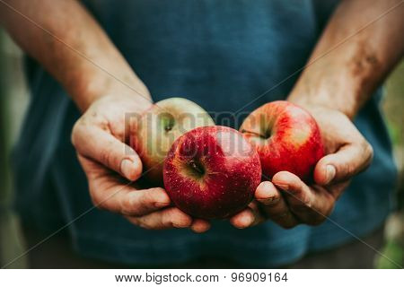 Farmer With Apples