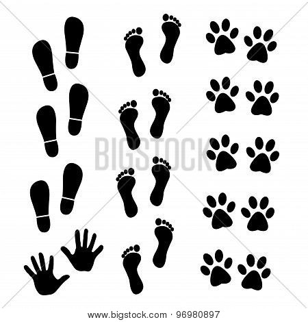 collection of human and animal trace