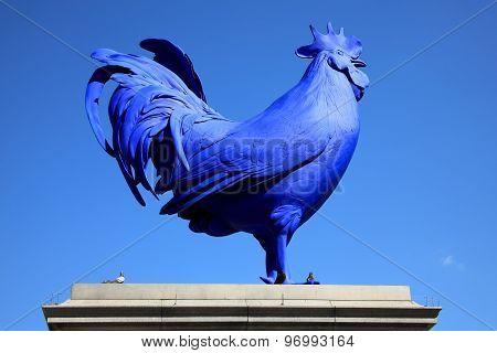 Blue cockerel