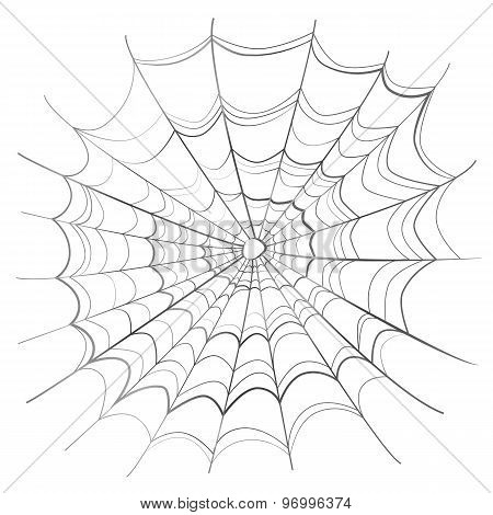 Complicated spider web on white