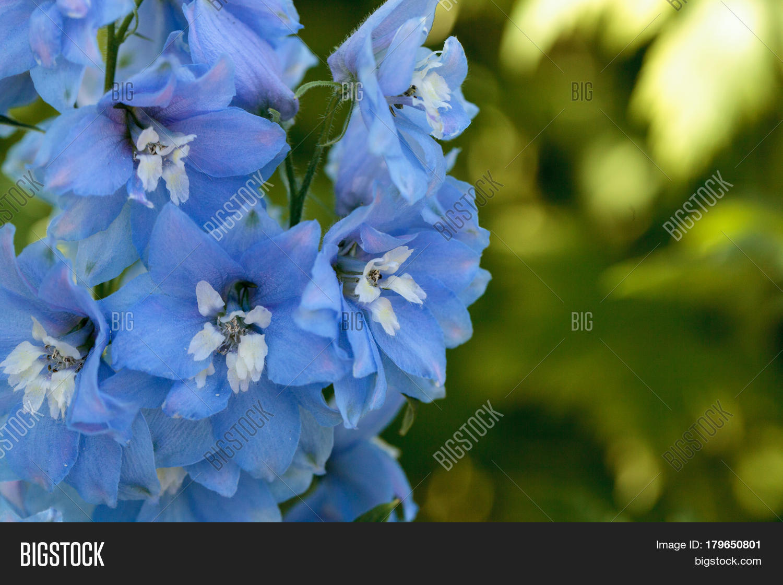 Purple Blue White Image Photo Free Trial Bigstock