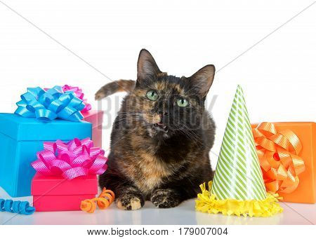 Close up of one Tortie Torbie Tabby cat laying down on a reflective table surrounded by bright colorful birthday presents and a party hat isolated on a white background. Mouth open as if talking.