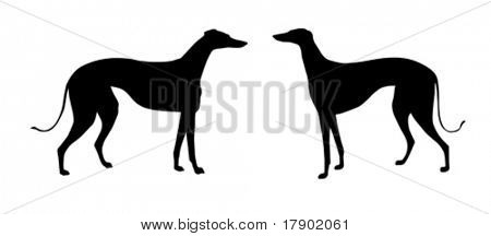 vector illustration greyhound on white background