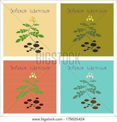 assembly of flat Illustrations nature plant Solanum