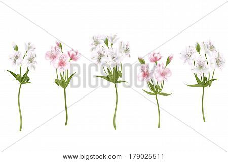 Flowers Alstroemeria On A White Background. Isolated Delicate White And Pink Flowers, Branches Set.
