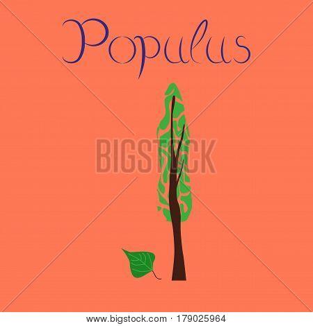 flat illustration on stylish background plant Populus