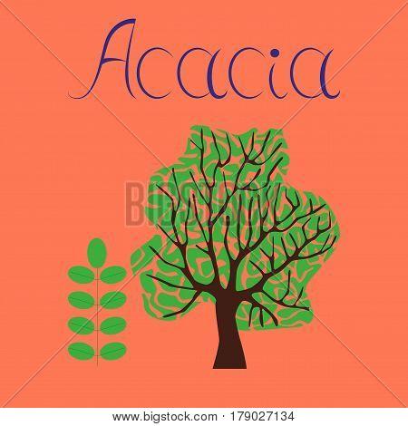 flat illustration on stylish background plant Acacia