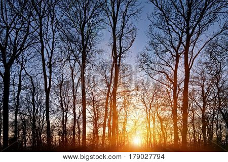 Silhouettes of trees in a forest in the early evening