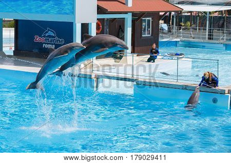 Zoomarine, Roma Italy - September  7,  2016: Clear water with amazing dolphins. Park Dolphinarium
