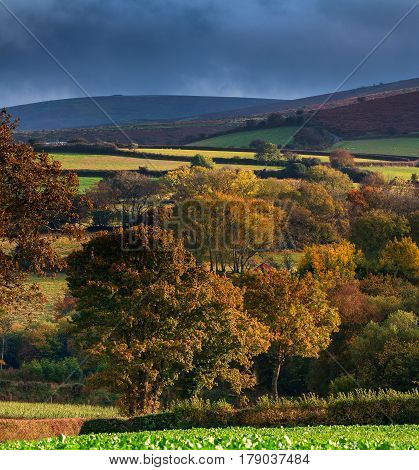 Large trees in the hills of the Dartmoor National Park. Low evening sunlight. Low clouds. Autumn. Devon. England