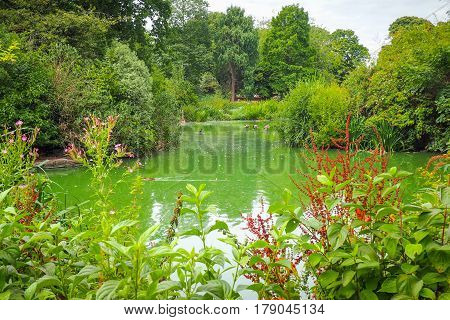 A pond with ducks surrounded with trees and flowers in Greenwich Park London.