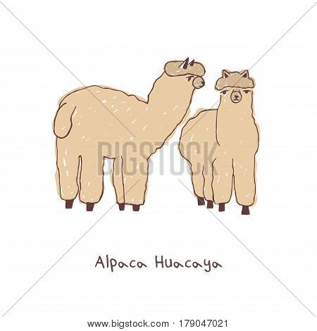 Two alpacas. hand drawn doodle vector illustration.