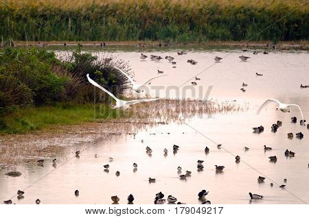An example of wetland with high diversity and concentration of wintering bird species (Italy, Isola della Cona).