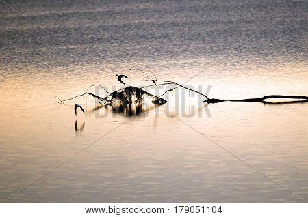 Calm sea at dawn with sea birds in flight.