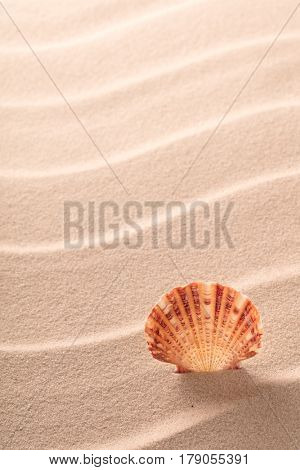 sseashell standing in rippled beach sand. Conccept for summer holiday vacation. Sea shell with texture background and copy space.