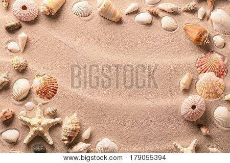 Sea shells and starfish on beach sand background with copy space.