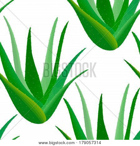 Aloe Vera seamless pattern. Aloe barbadensis., Star cactus, Aloin, Jafferabad or Barbados. Herbal medicine plant for skin and hair care, cosmetics, ointments, perfumery, wrapping, label, decoration