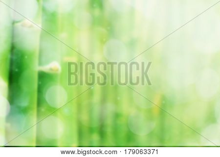 Blurred image of Bamboo tree for background