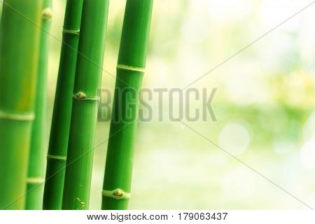 Fresh bamboo tree wtih bokeh light background