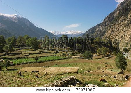 Beautiful village in the mountains with blue skys pure green fields and trees in swat valley kpk Pakistan