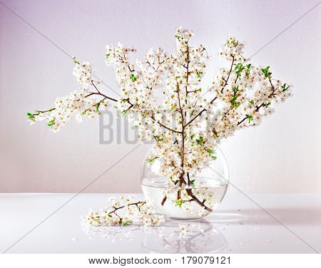 Beautiful branches of a blossoming apple tree in a glass vase with water
