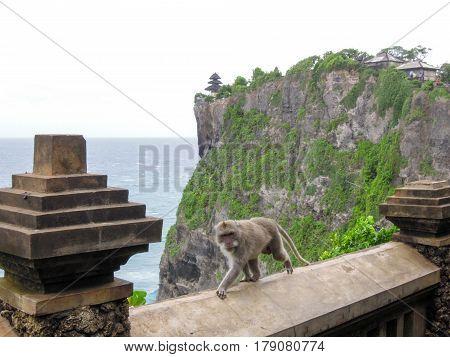 Monkey At The Temple Of Uluwatu