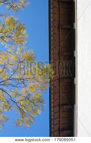 Roof Jacaranda Tree Palma