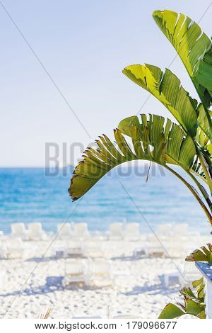FRENCH RIVIERA FRANCE - MAY 21 2016: Palm tree leaves shining under the sunlight in the foreground with beach bokeh background shot in Juan Les Pins in summer with shallow depth of field