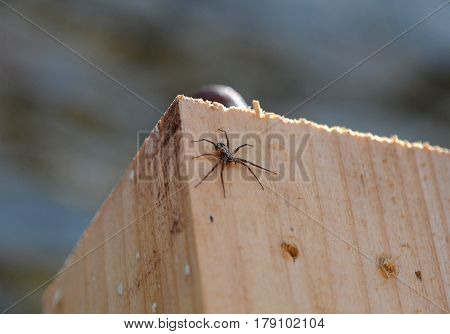 small spider crawling on a wooden block
